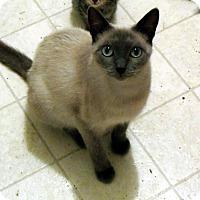 Adopt A Pet :: Lily Ann - Pensacola, FL