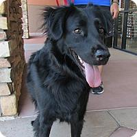 Adopt A Pet :: Southpaw - Gilbert, AZ