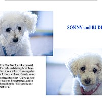 Adopt A Pet :: SONNY and BUDDY - Phoenix, AZ