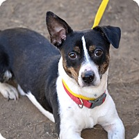 Adopt A Pet :: Pickles - Fort Riley, KS