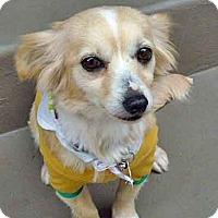 Adopt A Pet :: Missy - Los Angeles, CA