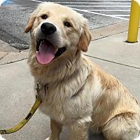 Adopt A Pet :: Jareth - Austin, TX