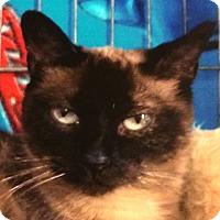 Adopt A Pet :: Suzie Q - Winchester, CA