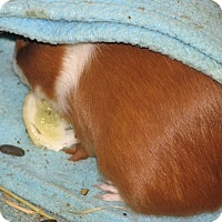 Adopt A Pet :: Sassy - Holdingford, MN