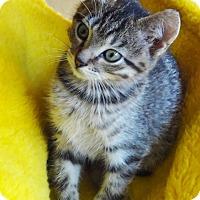 Adopt A Pet :: Elijah - N. Billerica, MA