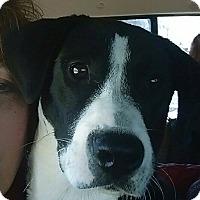 Adopt A Pet :: Remy - Charlestown, RI