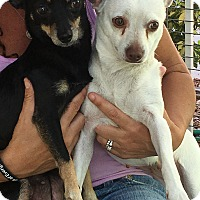 Adopt A Pet :: Star and Pearl - Ft. Lauderdale, FL