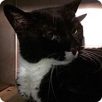Adopt A Pet :: Sophie - Trevose, PA