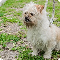 Adopt A Pet :: Mercedes - Houston, TX