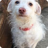 Adopt A Pet :: Ella - Santa Ana, CA