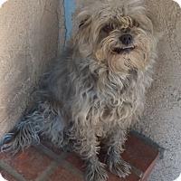 Adopt A Pet :: Smokey - Thousand Oaks, CA