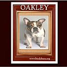 Adopt A Pet :: Oakley