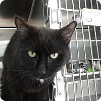 Adopt A Pet :: Rasputin - Elyria, OH