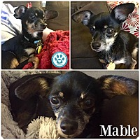 Adopt A Pet :: Mable - Kimberton, PA