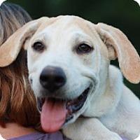 Adopt A Pet :: Matilda - Nanuet, NY