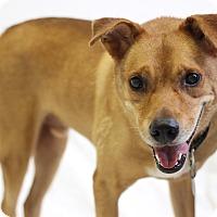 Adopt A Pet :: Winston - Bradenton, FL