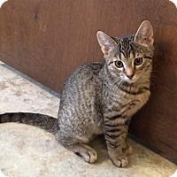 Adopt A Pet :: Bitsy - Colmar, PA