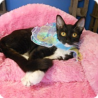 Adopt A Pet :: Celeste - Glendale, AZ