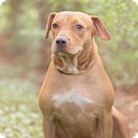 Adopt A Pet :: Betty Boo - Beaumont, TX