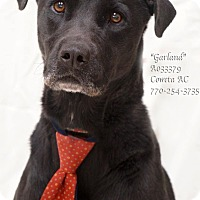 Adopt A Pet :: Garland - Newnan City, GA
