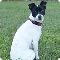 Adopt A Pet :: Amy - adoption pending - Pleasanton, CA