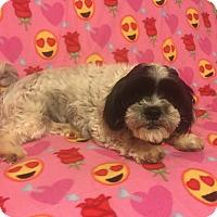 Adopt A Pet :: Mattie - Snyder, TX