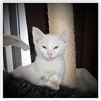Adopt A Pet :: PEARL - Medford, WI