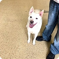 Adopt A Pet :: Marley - Marion, IN