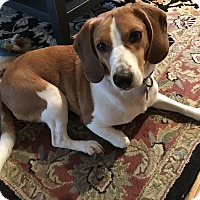 Adopt A Pet :: Hero - Media, PA