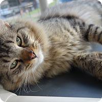 Adopt A Pet :: Ernest - Waller, TX