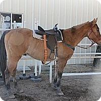 Adopt A Pet :: Concho - Farmersville, TX