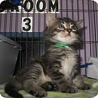 Adopt A Pet :: Franky - Shelton, WA