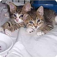 Adopt A Pet :: Donny & Danny - Quincy, MA