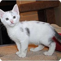 Adopt A Pet :: Darcy - Palmdale, CA