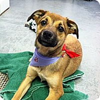 Adopt A Pet :: Tania - Fort Riley, KS