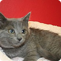 Adopt A Pet :: ELAINE - SILVER SPRING, MD