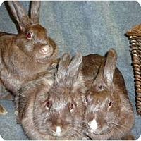 Adopt A Pet :: Georgia, Cocoa Puff & Smores - Newport, DE