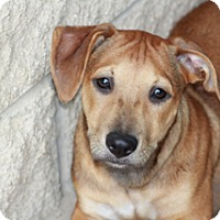Adopt A Pet :: Paddy-Meet Him!! - Norwalk, CT