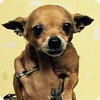 Adopt A Pet :: Dingy - Orlando, FL
