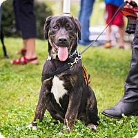 Adopt A Pet :: Rebel - Cumming, GA