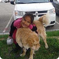 Adopt A Pet :: Marley - pending - Mira Loma, CA