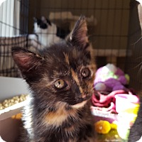 Adopt A Pet :: Selena - Berkeley Hts, NJ