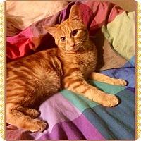 Adopt A Pet :: Maki - Mt. Prospect, IL