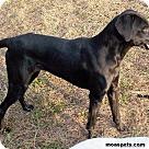 Adopt A Pet :: Nudge