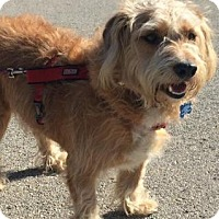 Adopt A Pet :: Fritz - North Richland Hills, TX