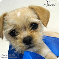 Adopt A Pet :: Taipei - Simi Valley, CA
