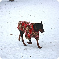 Adopt A Pet :: Athena - Buffalo, MN