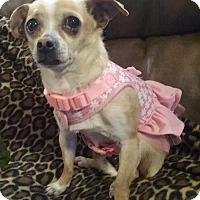 Adopt A Pet :: Nicki - Louisville, KY - Dayton, OH