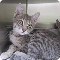 Adopt A Pet :: Becky  $60 - North Richland Hills, TX