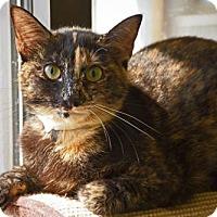Adopt A Pet :: Mia - Beckley, WV
